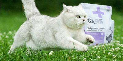 nutrience cats